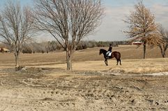 Horse riding. Young woman riding her horse in a field after the snow melted Stock Photography
