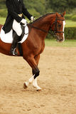 Horse riding. A picture of an equestrian on a sorrel horse in motion over natural background royalty free stock photo