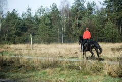 Horse-riding. In the free nature Stock Images