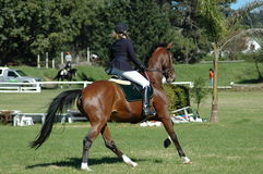 Horse riding. A female Caucasian horse rider riding her beautiful brown horse at the riding school outdoors Stock Photos