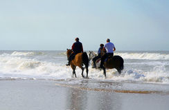 Horse riding. Three horse riding seniors on the beach Stock Image