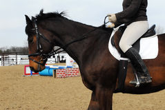 Horse Riding. Woman on horse in arena riding bay thoroughbred horse Stock Photography