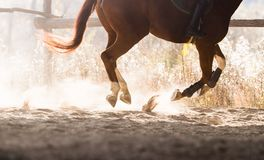 A horse riding in the autumn. S Stock Photography