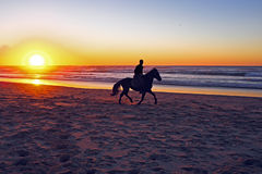 Horse riding on the beach. At sunset Royalty Free Stock Photo