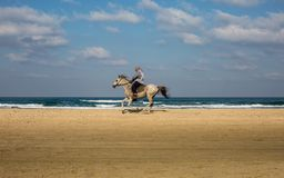 A man riding a horse on the beach royalty free stock image