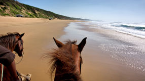 Horse riding on beach - view from the horse Stock Photos