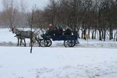 Horse riding in a carriage. Royalty Free Stock Images