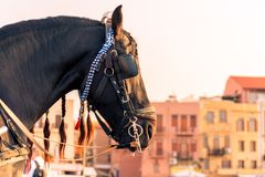 Horse riding in Chania Crete Greece. One of the horses in the the port of Chania in Crete Greece. Ideal for the summer season stock photos