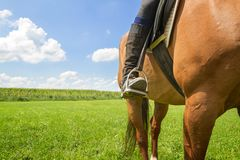 Horse riding on a field Royalty Free Stock Image