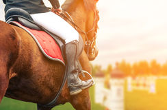 Horse riding closeup Royalty Free Stock Photography