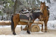 Horse riding club in Borovetz resort Royalty Free Stock Image