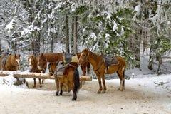 Horse riding club in Borovetz resort Stock Image