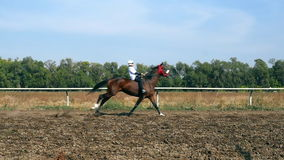 Boy riding a Horse in slow motion. Horse riding competition in slow motion jockeys compete in horse races stock footage
