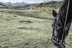 Horse Riding Cusco royalty free stock photo