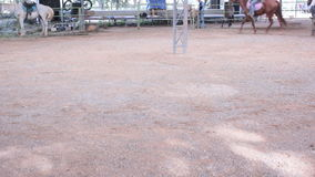 Horse riding demonstrations stock video