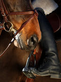Horse riding equipment detail Stock Image