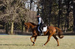 Horse riding in field Royalty Free Stock Photos