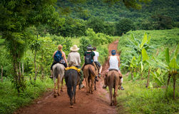 Horse riding. A group of people at horse riding through the forest Stock Photos