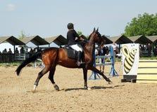 Horse riding Royalty Free Stock Image