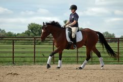 Horse riding lesson Stock Images