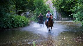 Horse riding. In nature on the river stock photography