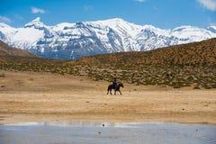 Horse Riding Pilgrim Mountains Holy Lake Dhankar Stock Photo