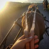 Horse riding pov stock photos