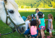 Horse riding school Stock Photo