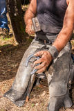 Horse riding. Horse shoeing contry live Stock Images