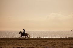 Horse riding silhouette at the beach Stock Photos