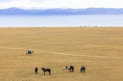 Horse Riding in Song kul Lake in Kyrgyzstan. This photo was taken in Song kul Lake in Kyrgyzstan. The Central Asian country of Kyrgyzstan offers many royalty free stock image