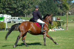 Horse riding sport stock photo