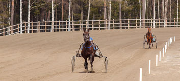 Horse riding. In Sweden at the lake Royalty Free Stock Photos