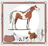 Horse and riding tack tools in leather belt frame. Stock Images