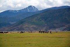 Horse riding to snow mountain trip Stock Image