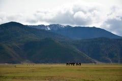 Horse riding to snow mountain trip Royalty Free Stock Image