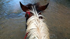 Horse in the water. Horse riding to Waterfall Baguite, Jarabacoa, Dominican republic through river Stock Photo