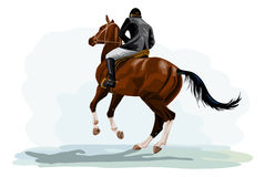 Horse riding tournament. Rider on horse riding tournament on galloping horse Stock Images