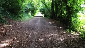 Horse Riding Trail in English Country Woodland Walkway stock footage