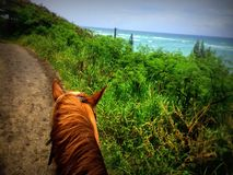 Horse riding through tropical fields. By a turquoise ocean Stock Photos
