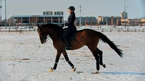 Horse riding - woman horsewoman is galloping on horseback on snow field