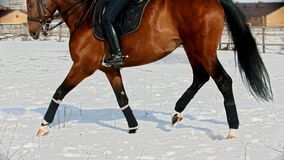 Horse riding - woman rider in a helmet galloping on a horse through a snowy field
