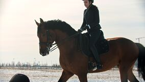 Horse riding - young woman horsewoman is galloping on horseback on snow field