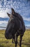 Horse on the Ringroad. Random horse on the ringroad in Iceland stock photos
