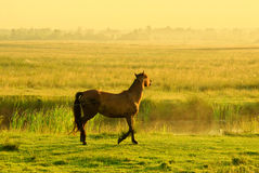 Horse of a rising sun. This bound horse meets a brave new dawn Stock Photo