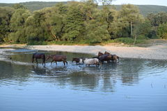 HORSE ON THE RIVER Stock Image