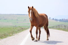 Horse on the road. To nature Royalty Free Stock Photos