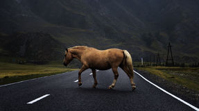 Horse on the road Royalty Free Stock Image