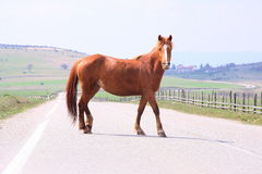 Horse on the road II. Horse on the road to nature Royalty Free Stock Photo