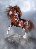 A horse on the rock. A powerful native horse stand on the rock - a wounderful fantasy scene Stock Image